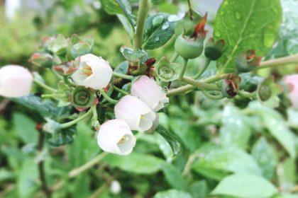 花から実へ